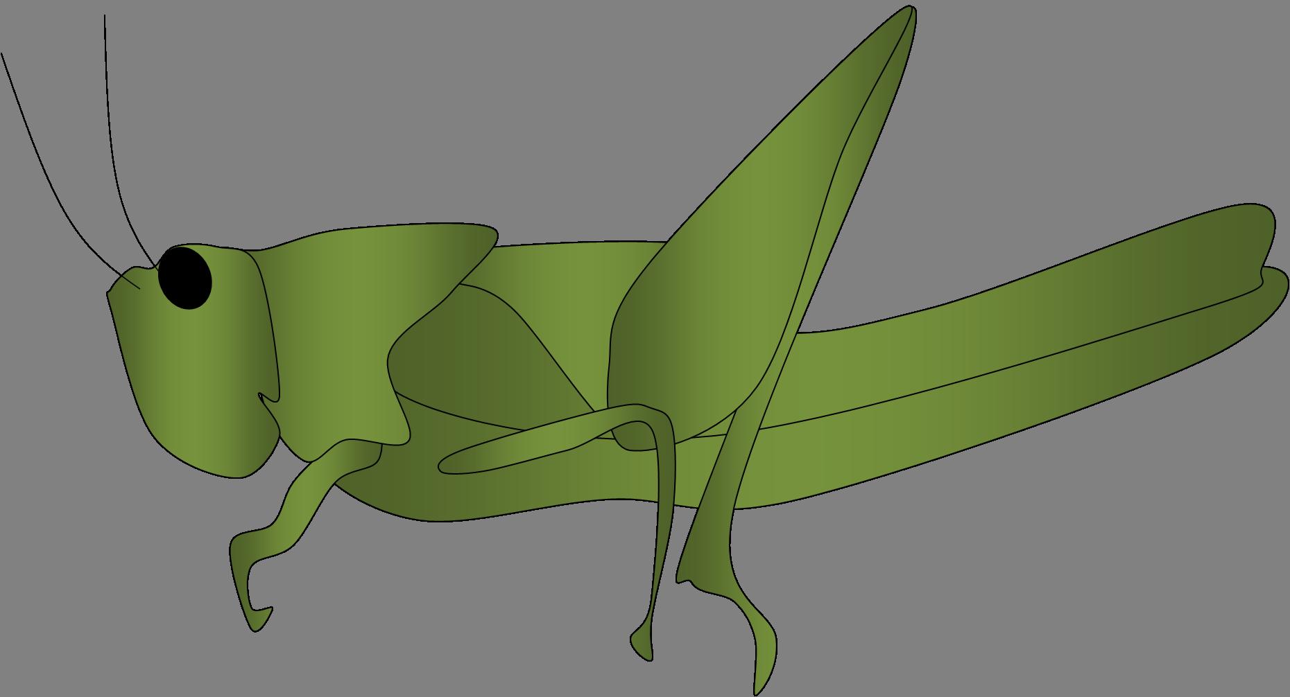 Grasshopper Outline | Clipart Panda - Free Clipart Images ...