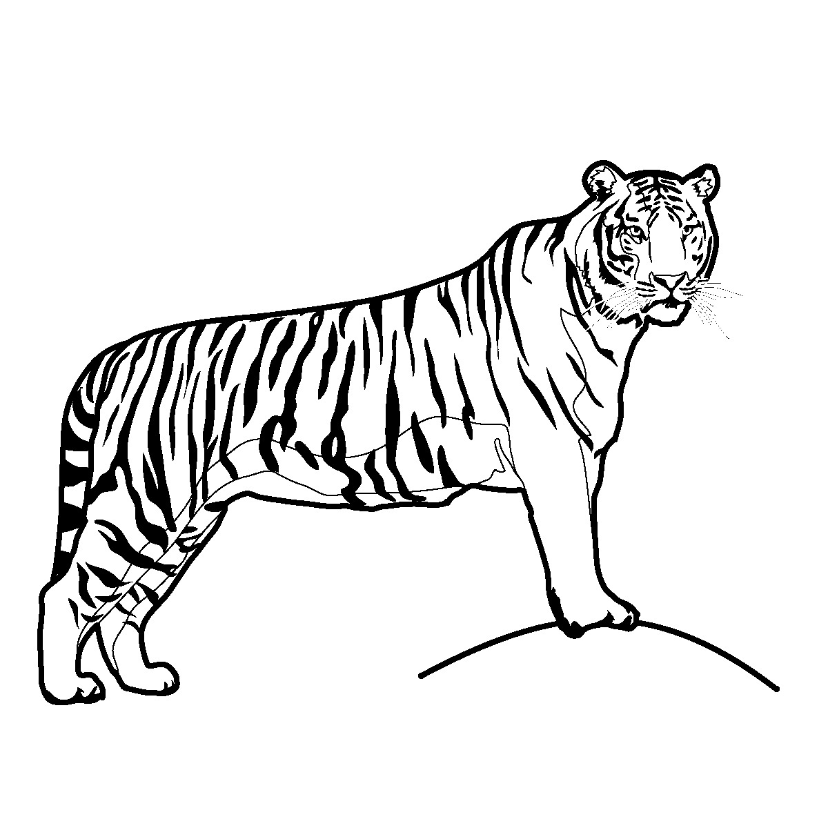 Tiger Clip Art Pictures Black And White | Clipart Panda - Free ...