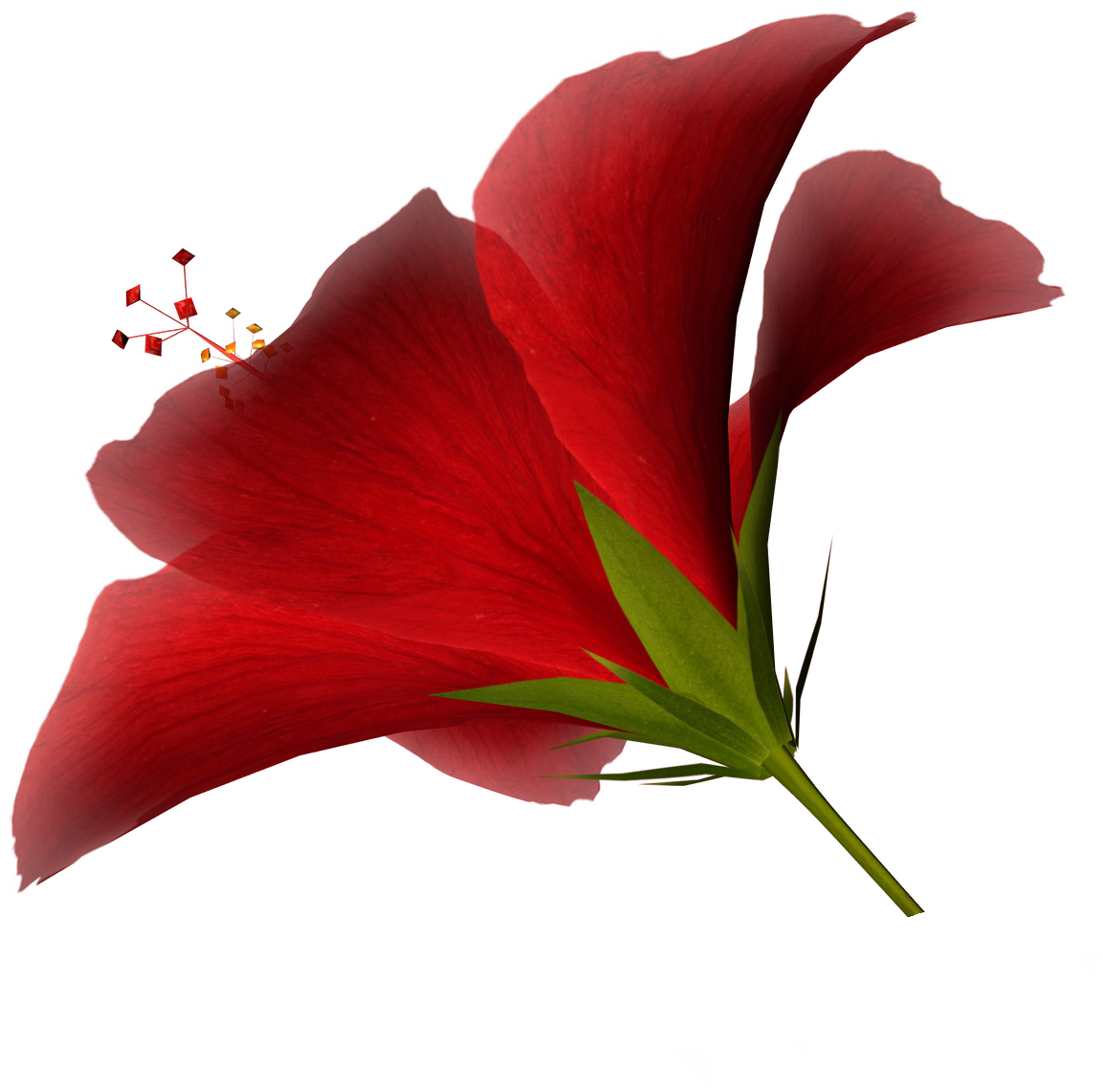 Red Flag With White Flower