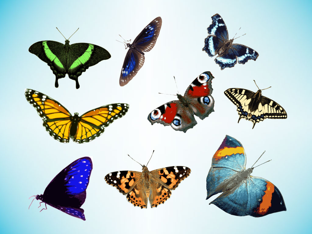 Real Life Butterfly Pictures Realistic Butterfly - ...