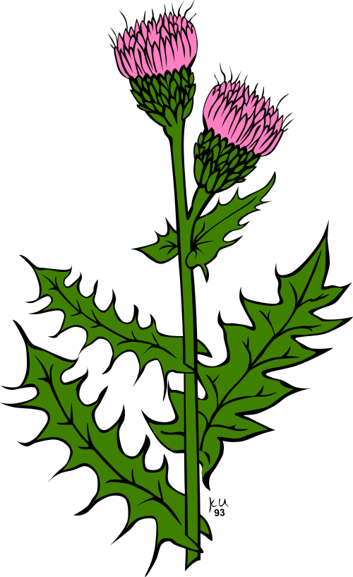thistle clipart rh worldartsme com thistle clipart black and white clipart thistle silhouette