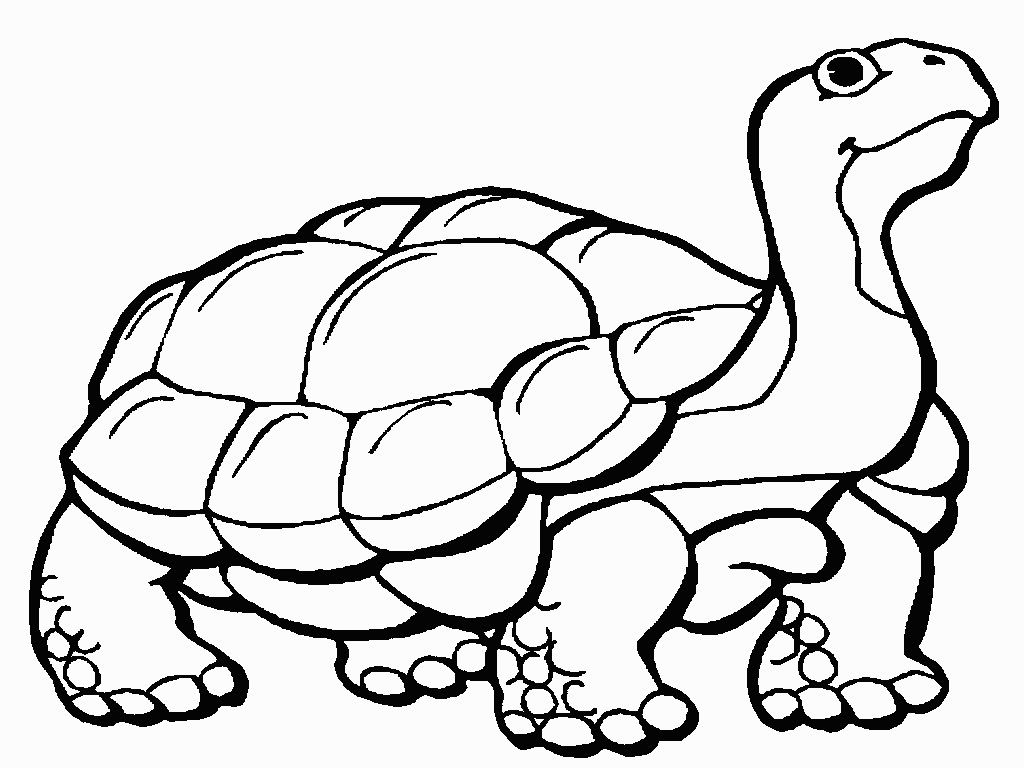 Animal Coloring Related Pictures Cute Turtle Coloring ...