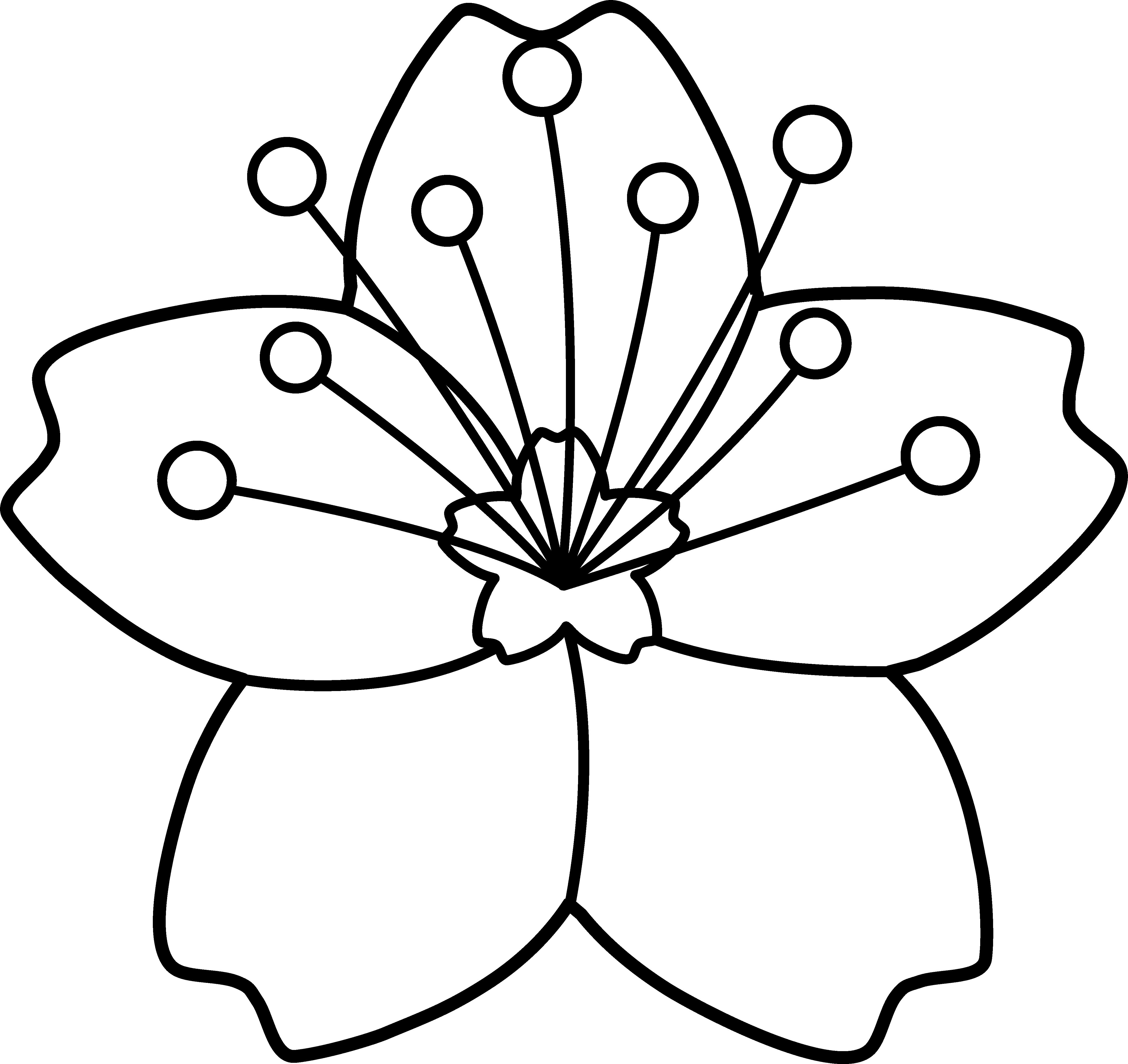 Cherry Blossom Line Art - Free Clip Art
