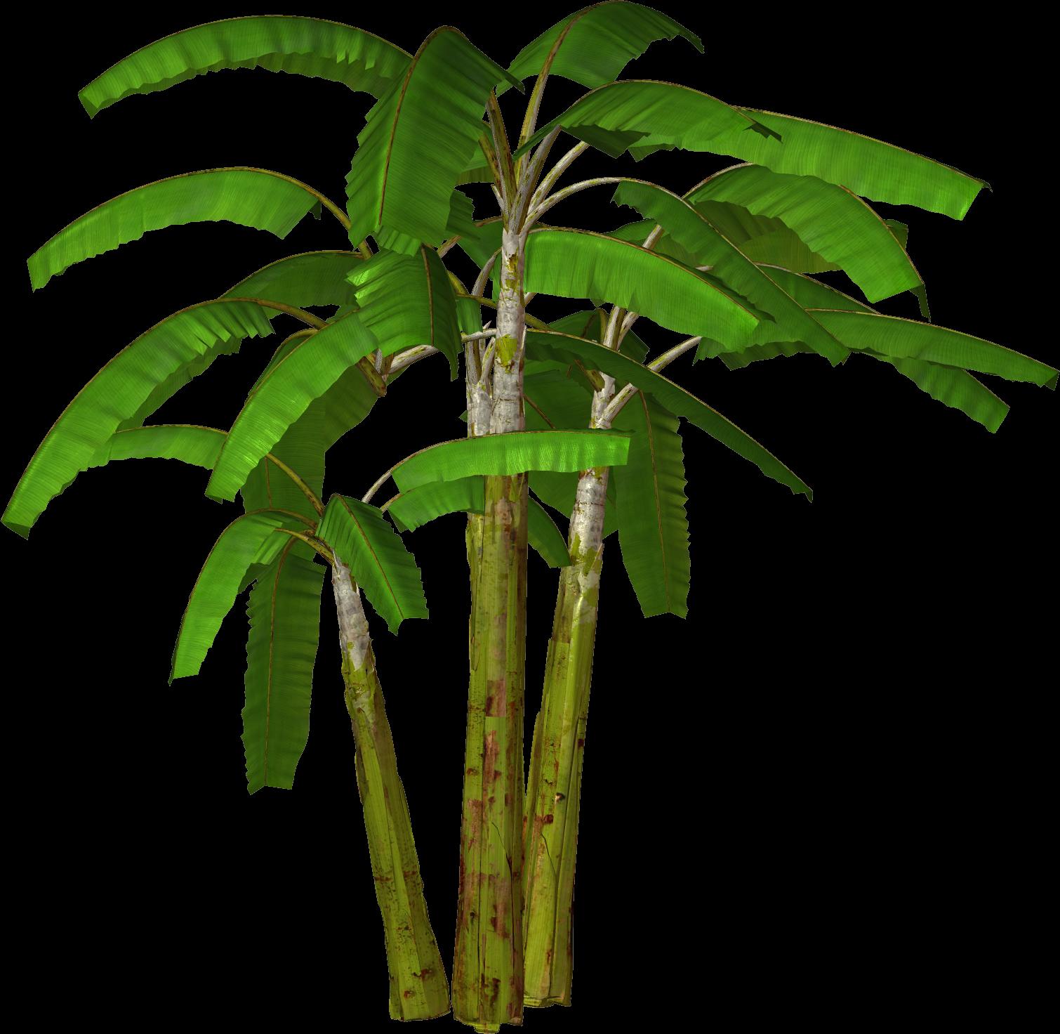 Clip Art Palm Trees - Cliparts.co