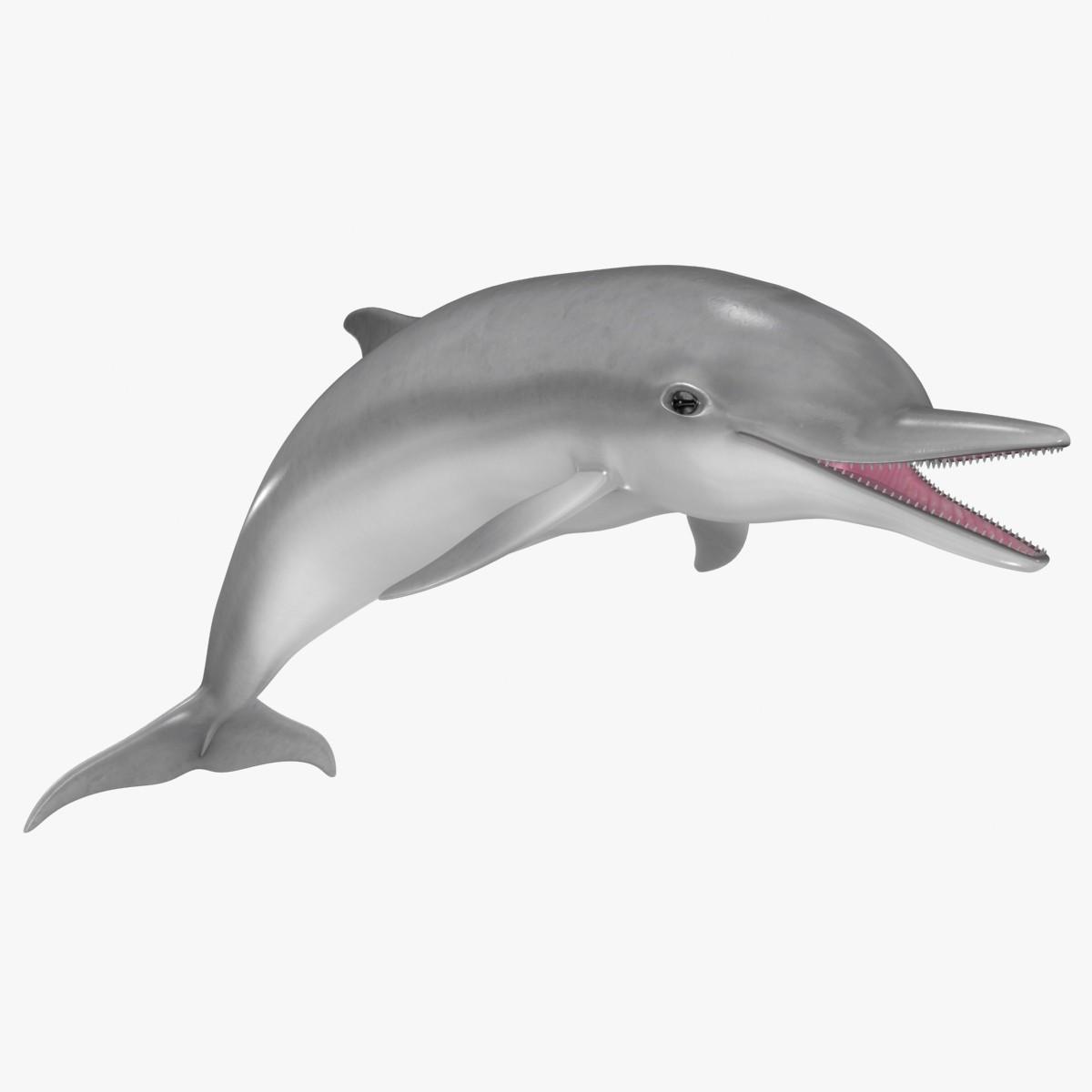 Dolphin 3D Models | TurboSquid com - Cliparts co