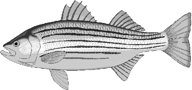 Bass Minnow Coloring Page