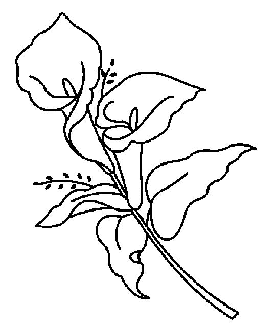easy lily coloring pages - photo #15