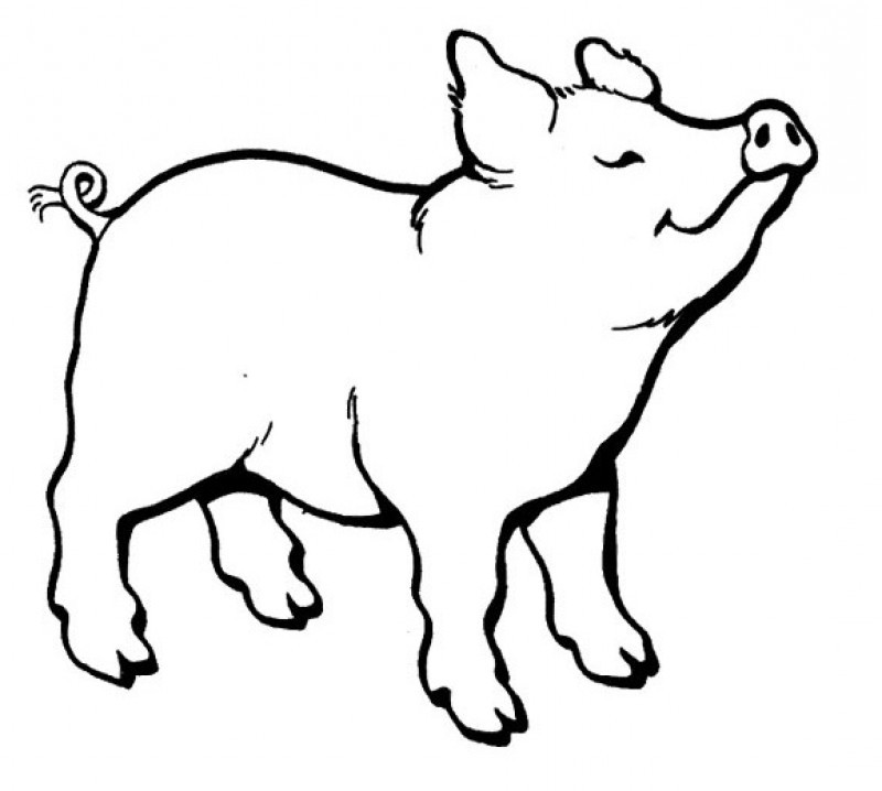 Pig Line Art Cliparts Co