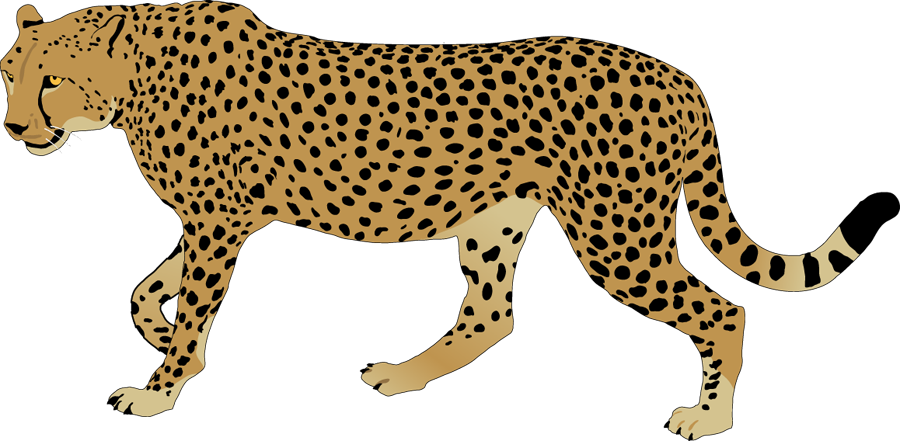 Cheetah Clip Art - Cliparts.co