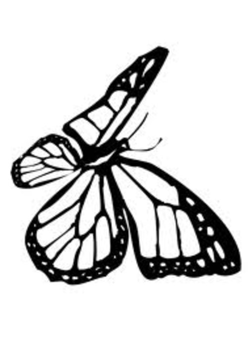 Monarch Butterfly Cartoon Cliparts