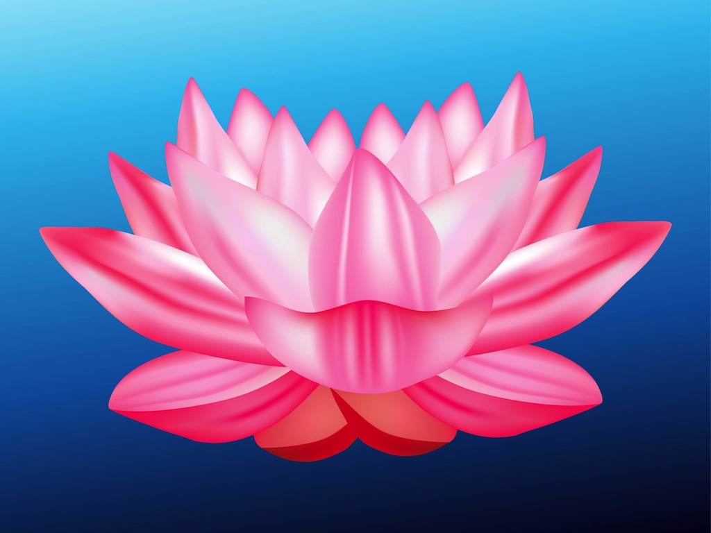 lotus-flower-vector.jpg