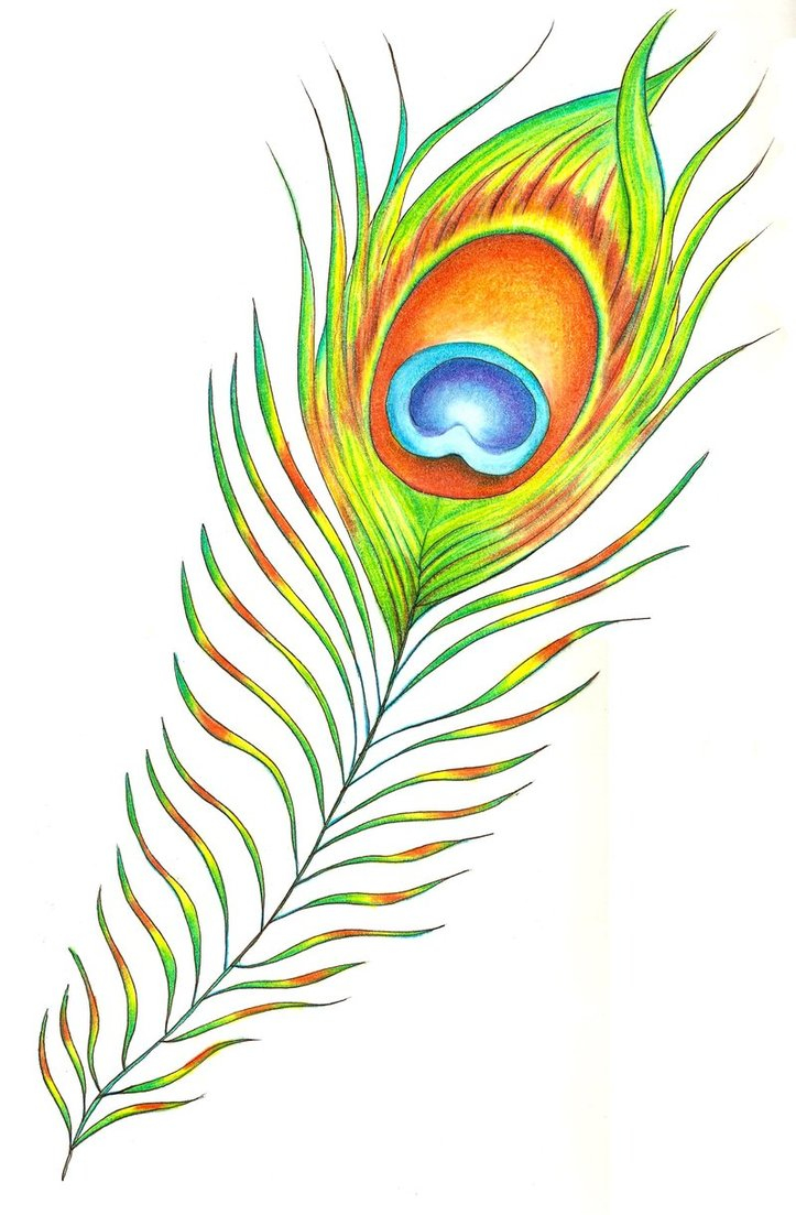 peacock feather border designs clipart panda free