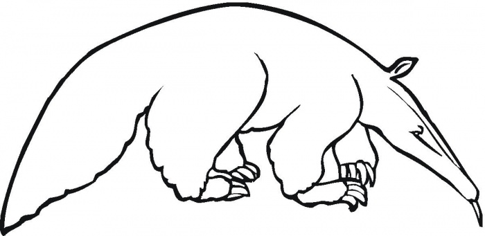 anteater 3 coloring page