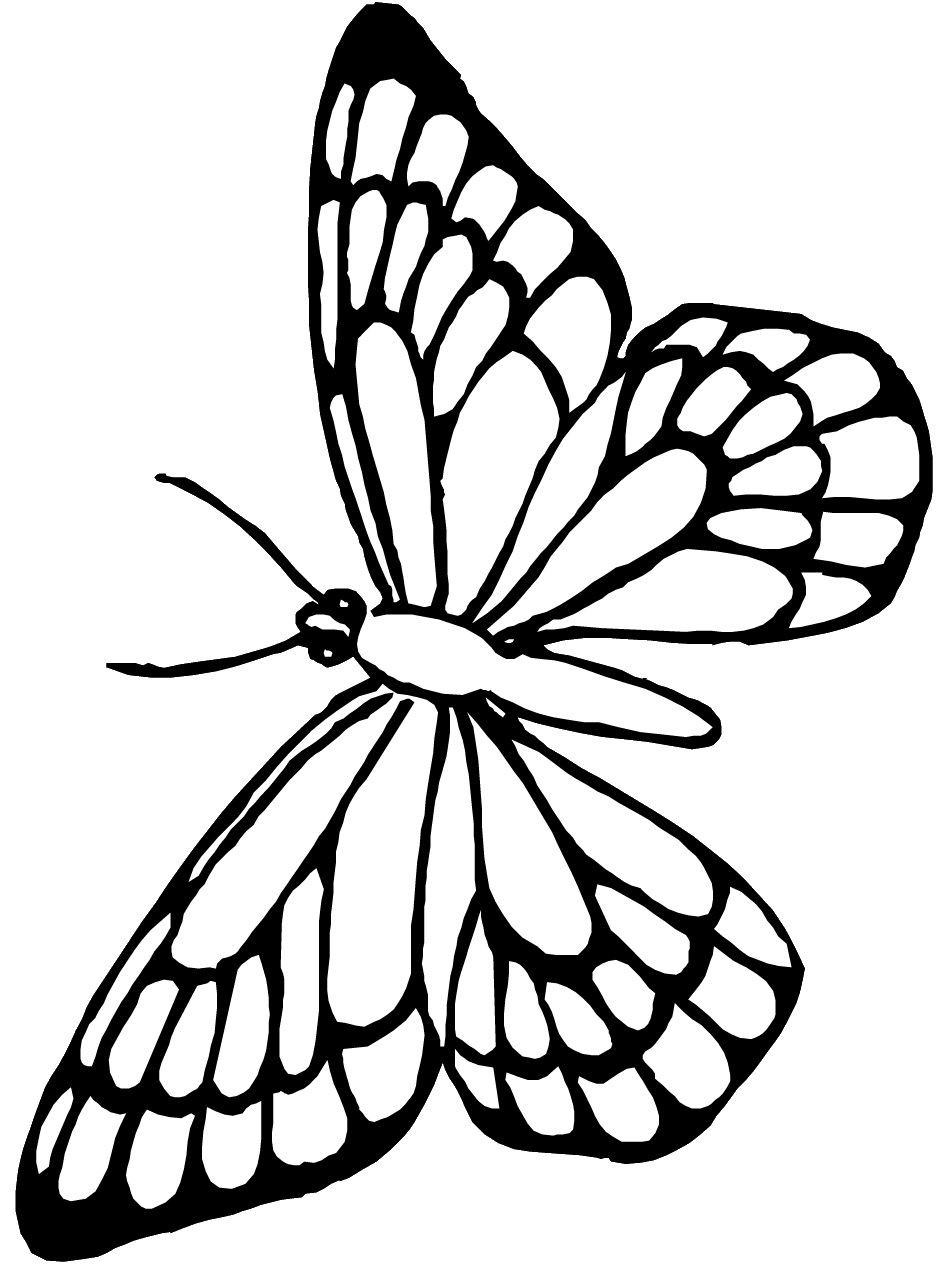 monarch butterfly cartoon cliparts co
