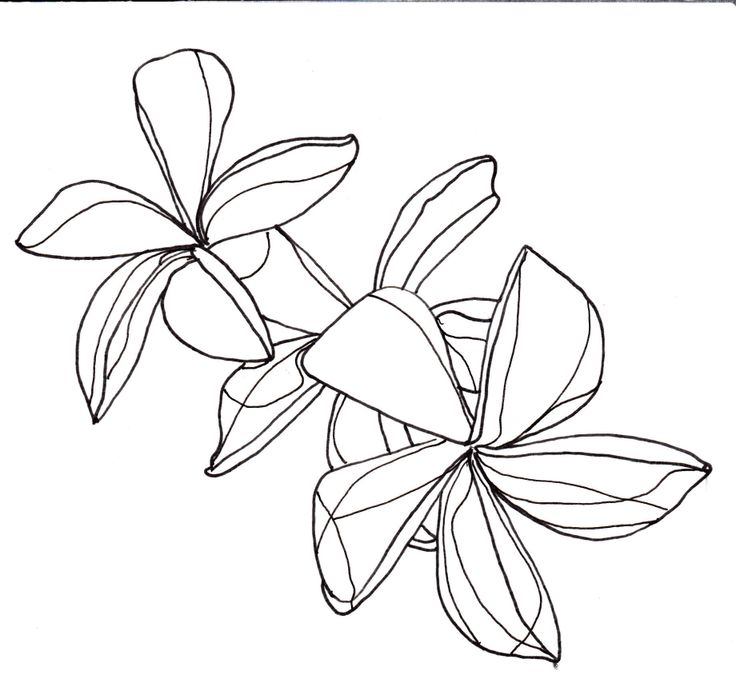 Line Art Flower Drawing : Flowers line drawing cliparts