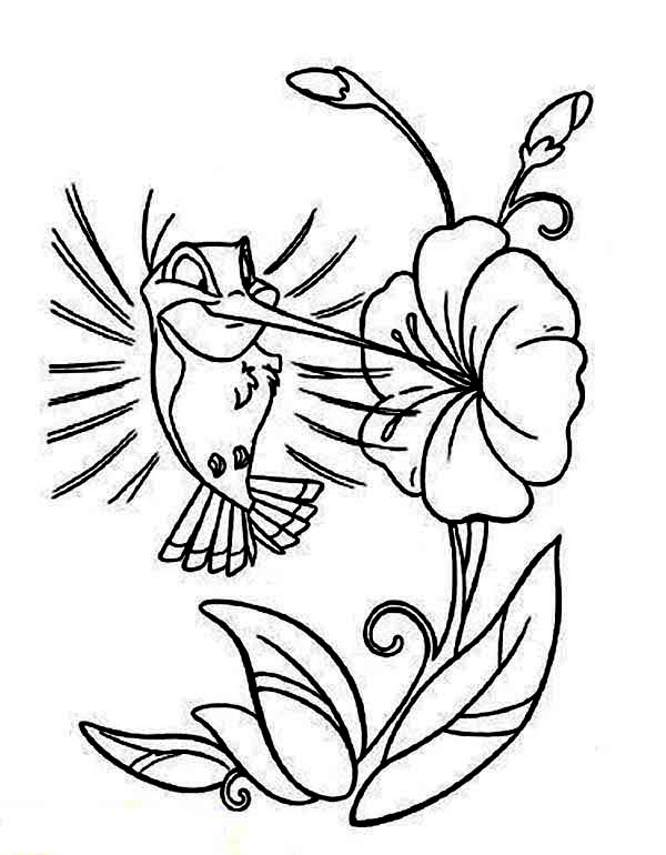 holiday coloring pages lily coloring pages cartoon hummingbird coloring page kids play color - Lily Coloring Pages