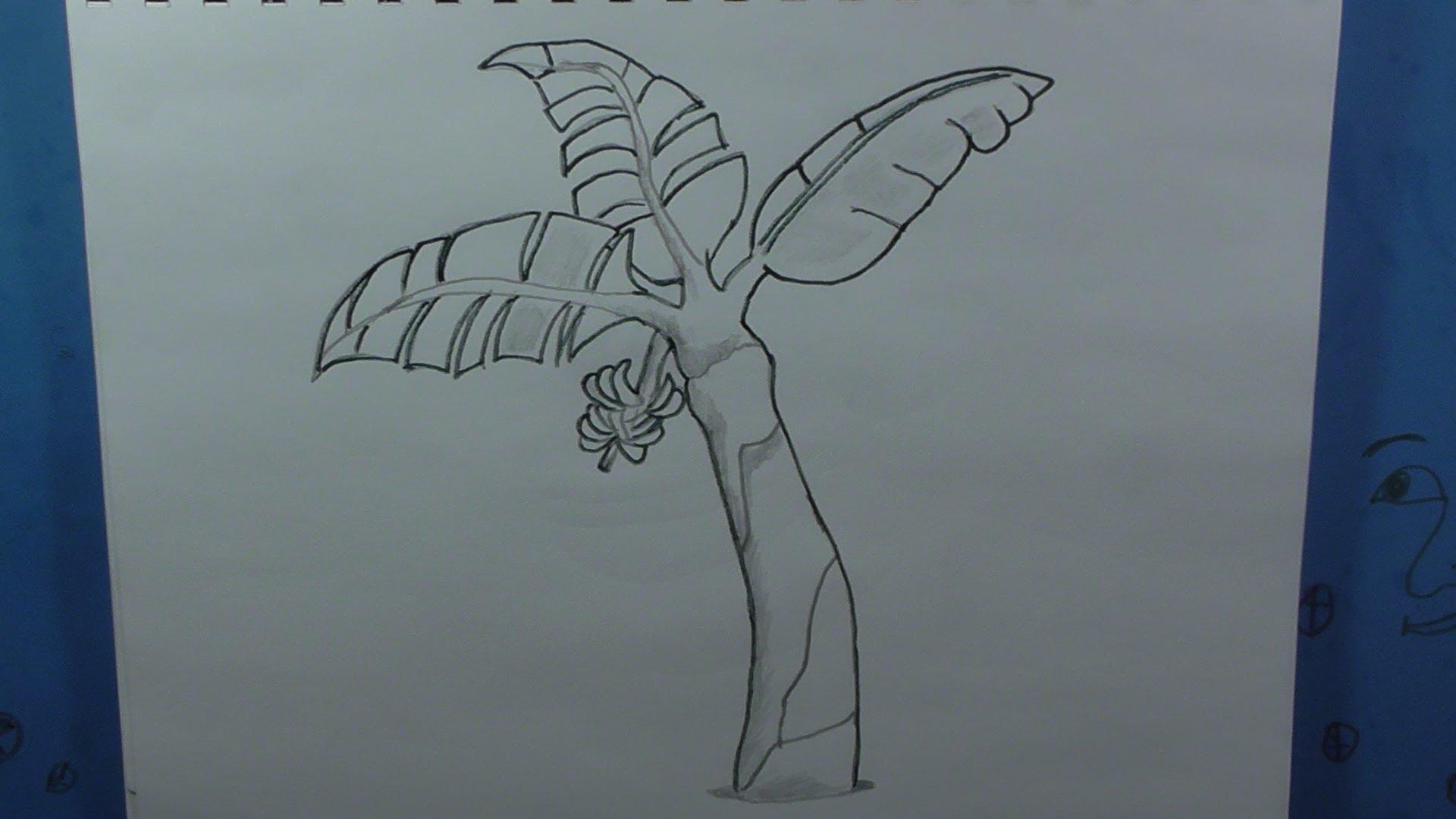 Banana Tree Drawing Cliparts Co