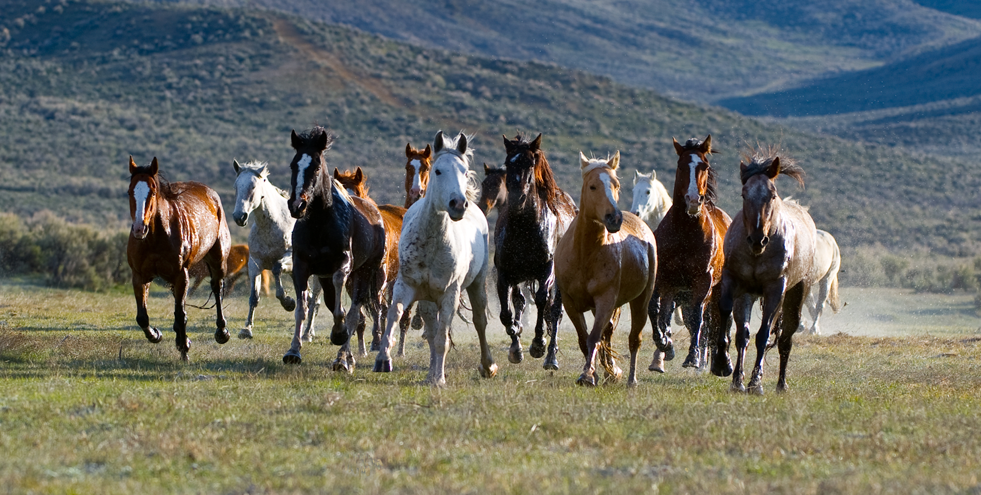 wild horse black dating site Bureau of land management wild horse and burro internet adoption login black captured: little owyhee hma this site uses cookies.