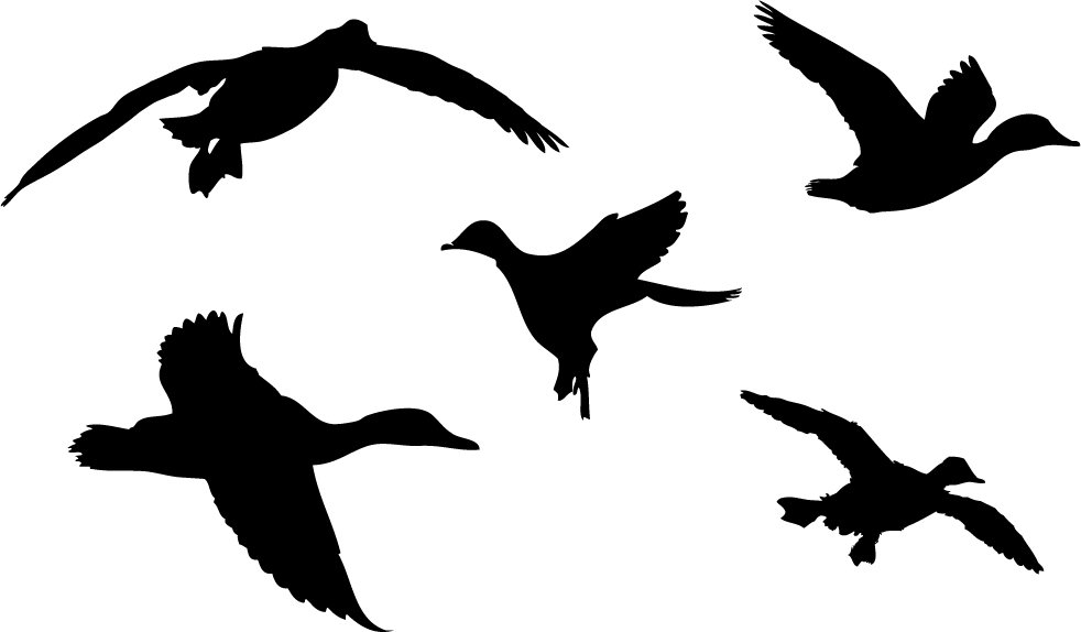Duck Silhouette Clip Art - Cliparts.co