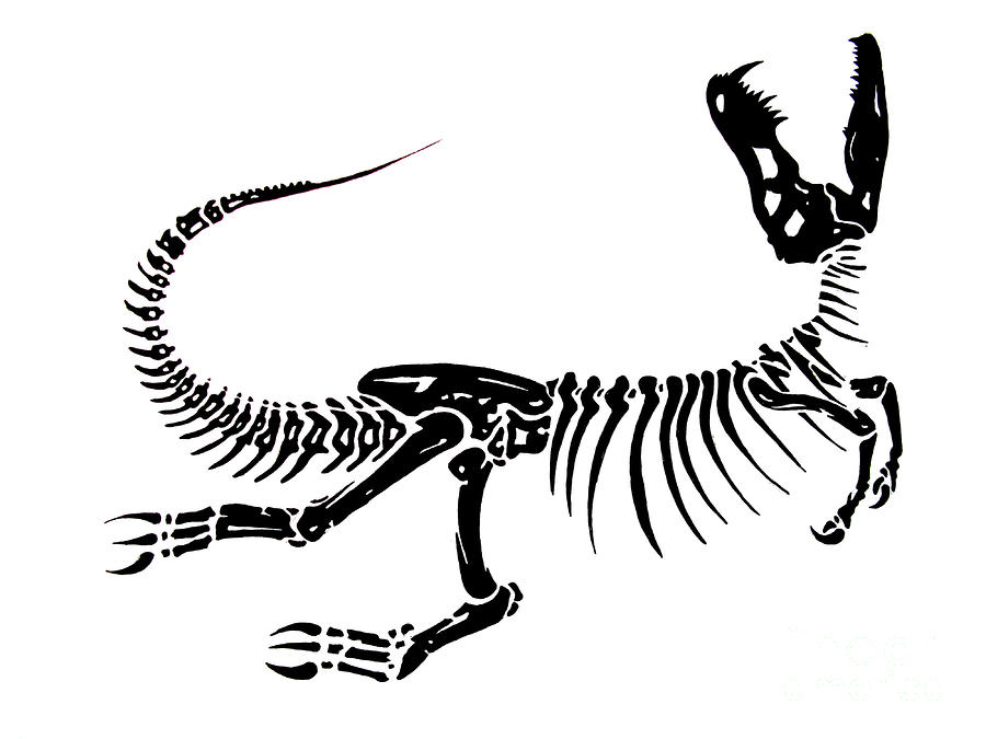 how to draw dinosaur bones