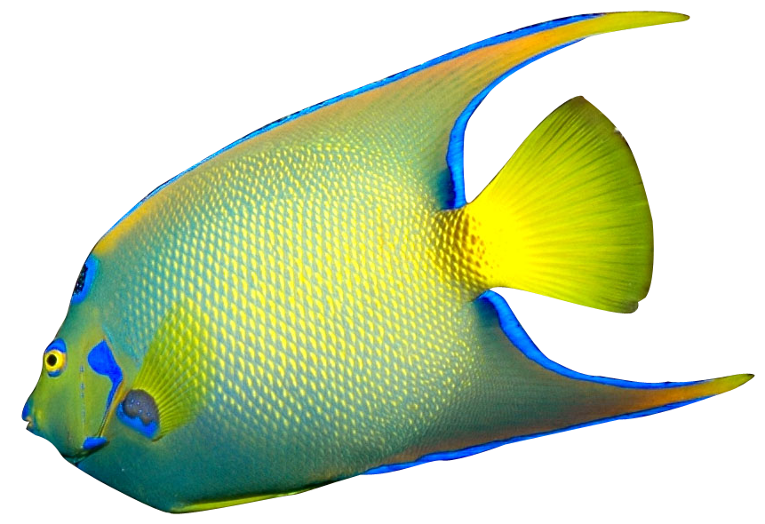 free clipart tropical fish - photo #8