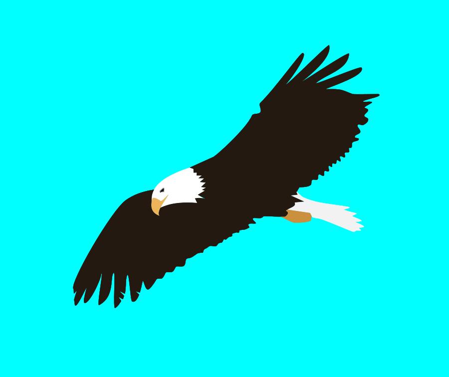 free bald eagle clipart - photo #6