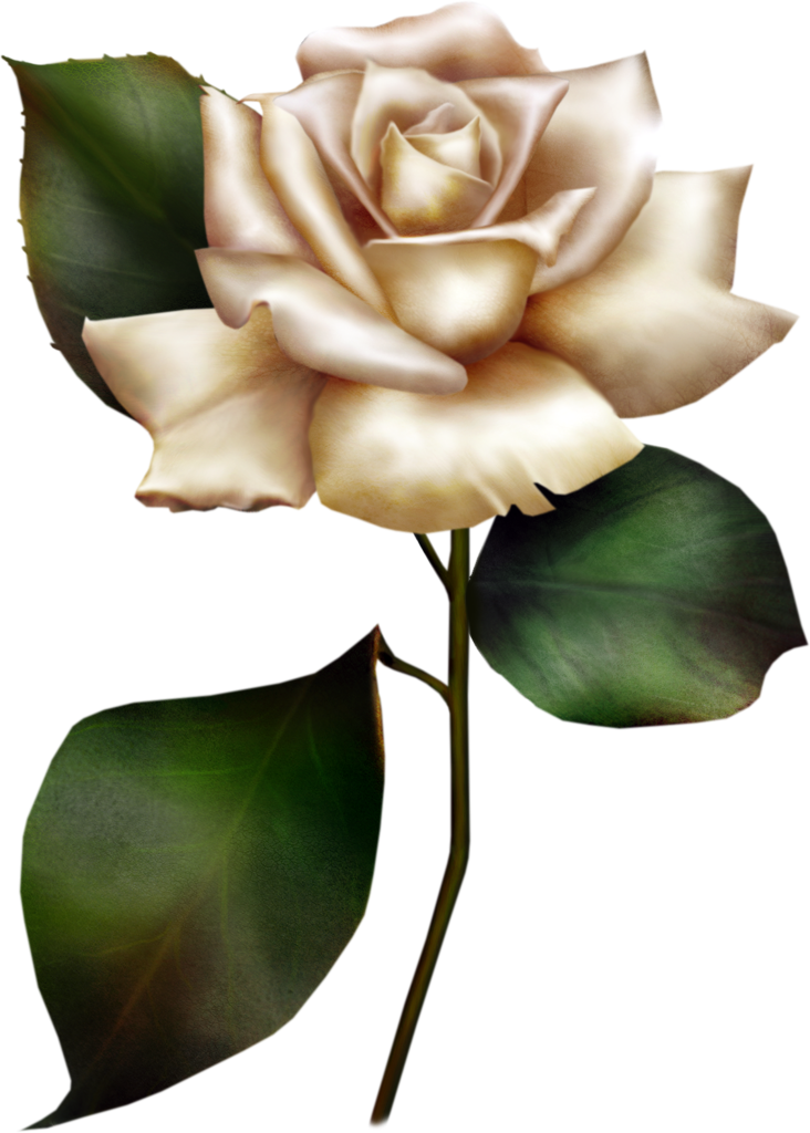 Painted White Rose Clipart