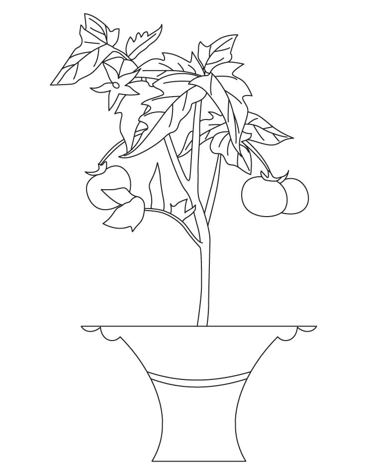 free printable tomato coloring pages - photo#31