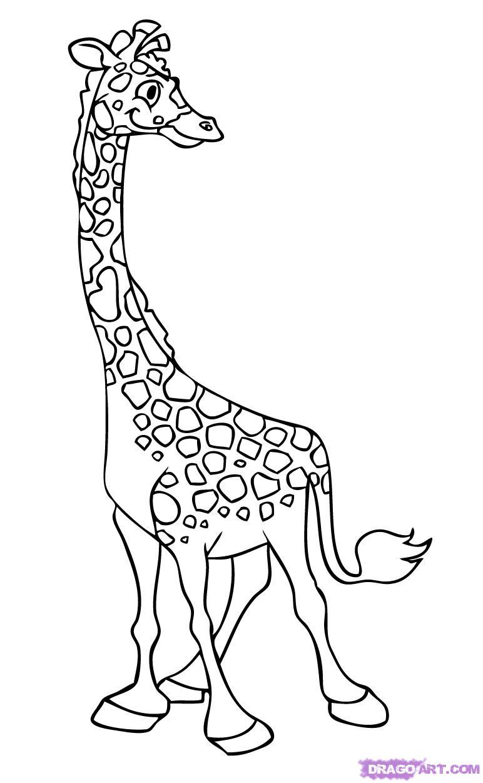 Line Drawing Giraffe : Giraffe line drawing cliparts