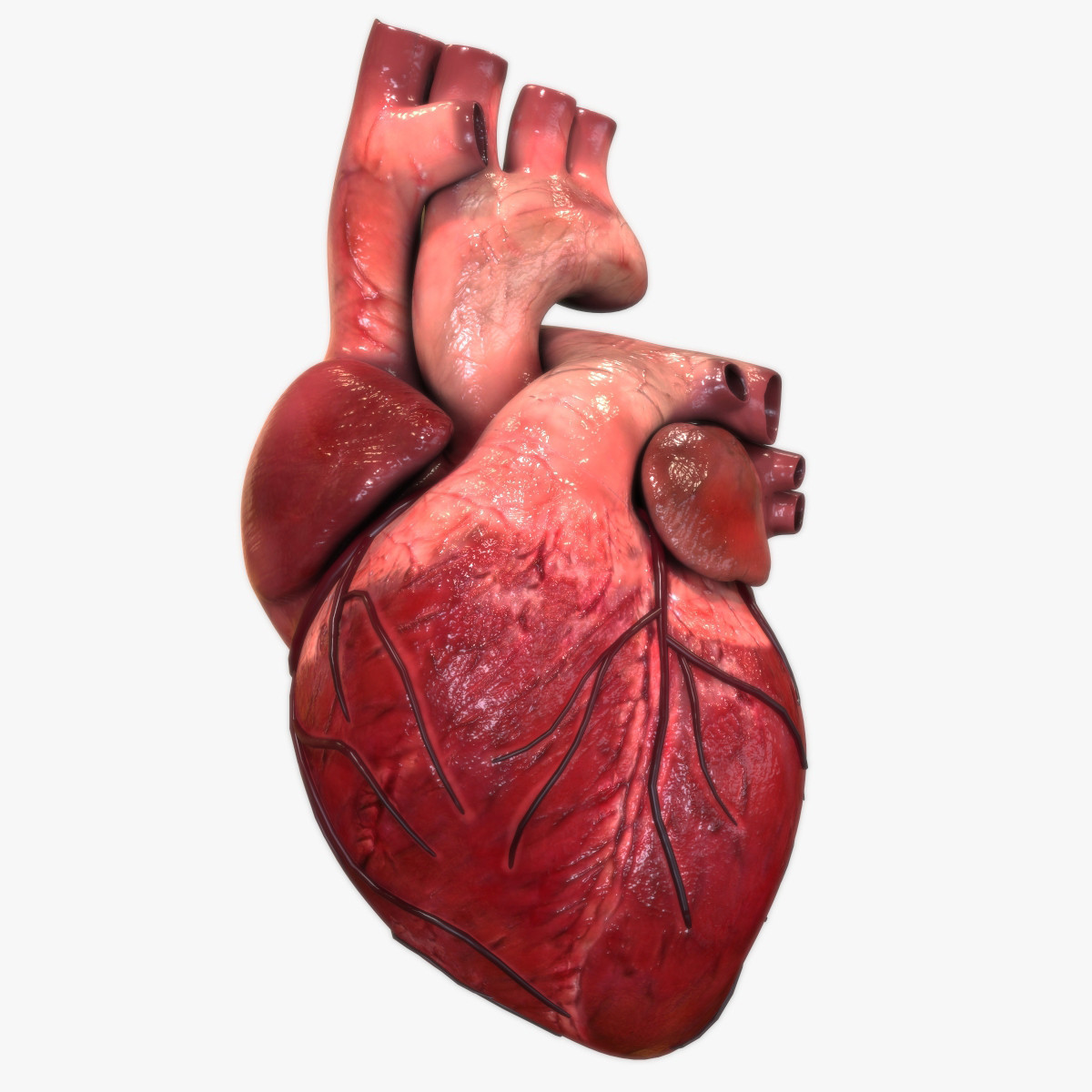 Real human heart images - photo#1