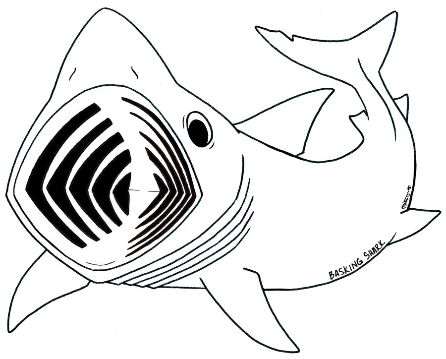 Line Art Shark : Cartoon shark pics cliparts