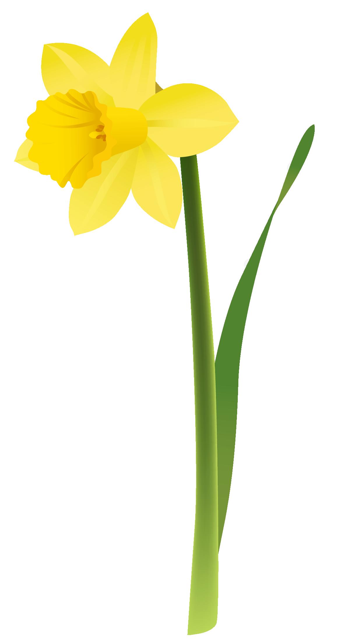 Daffodil Clip Art Free - Cliparts.co