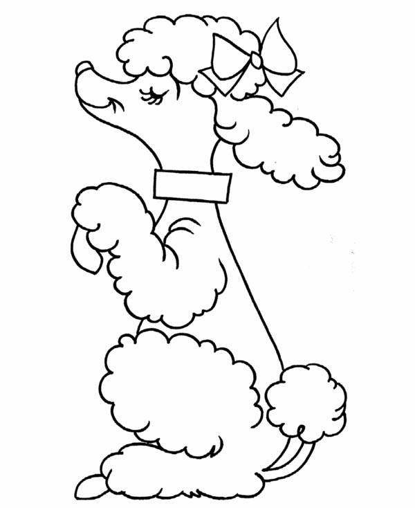 coloring pages of poodle dogs - photo#4