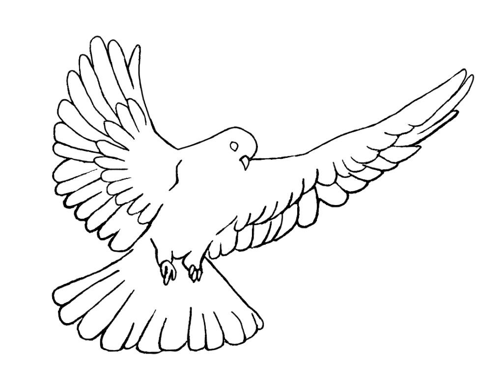 Line Art Dove : Dove line art cliparts