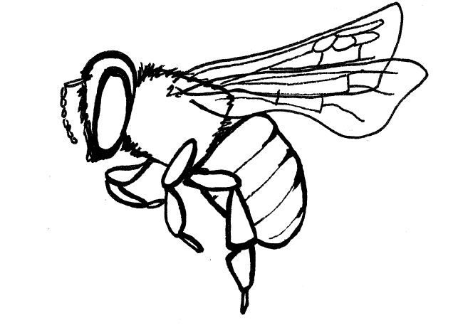 Line Drawing Bee : Honey bee drawings cliparts