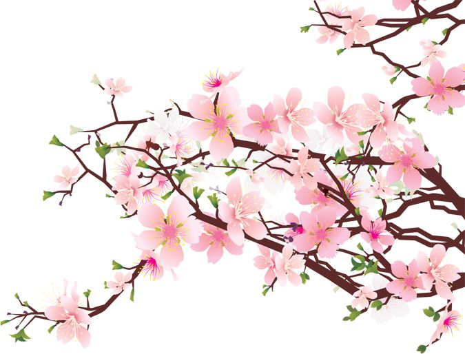 Cherry Blossom / Sakura on Pinterest | 273 Pins