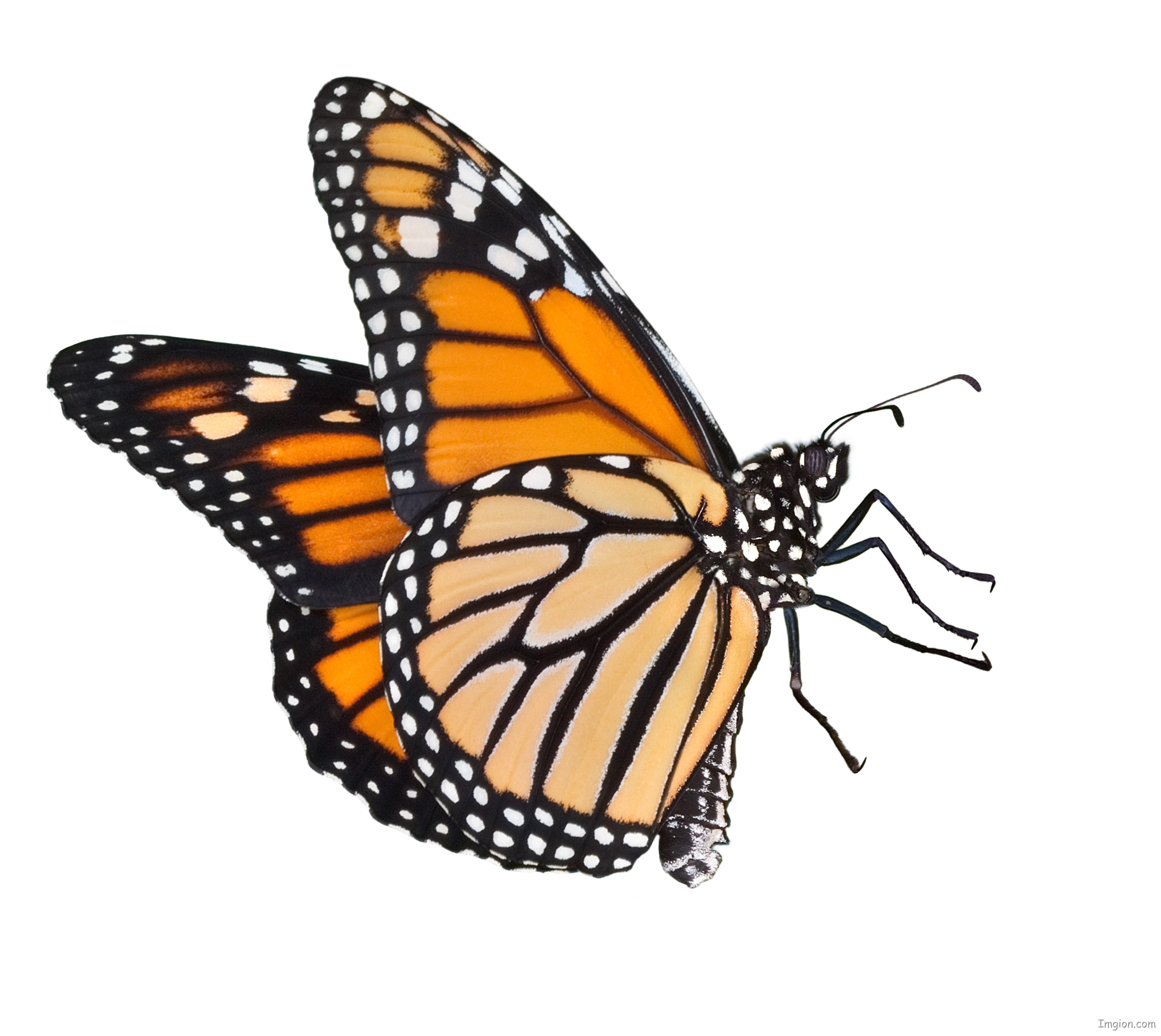 Monarch Butterfly Cartoon - Cliparts.co