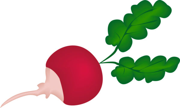 Radish Clipart - Cliparts.co