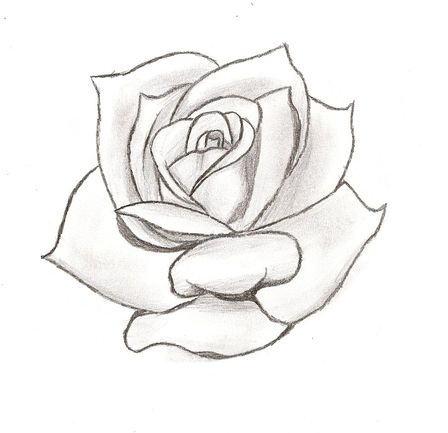 Cool Rose Designs To Draw Images amp Pictures Becuo