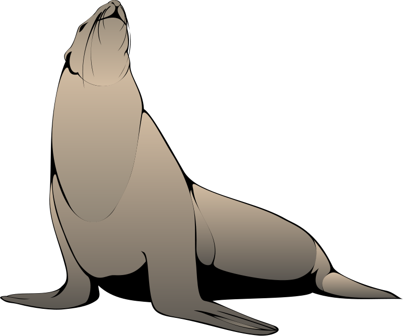 Seal Animal Clipart Pictures Royalty Free | Clipart Pictures Org