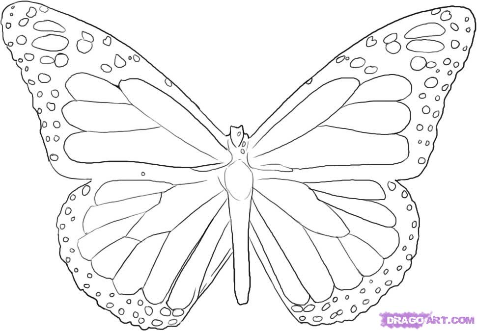 Line Drawings Of Butterflies - Cliparts.co