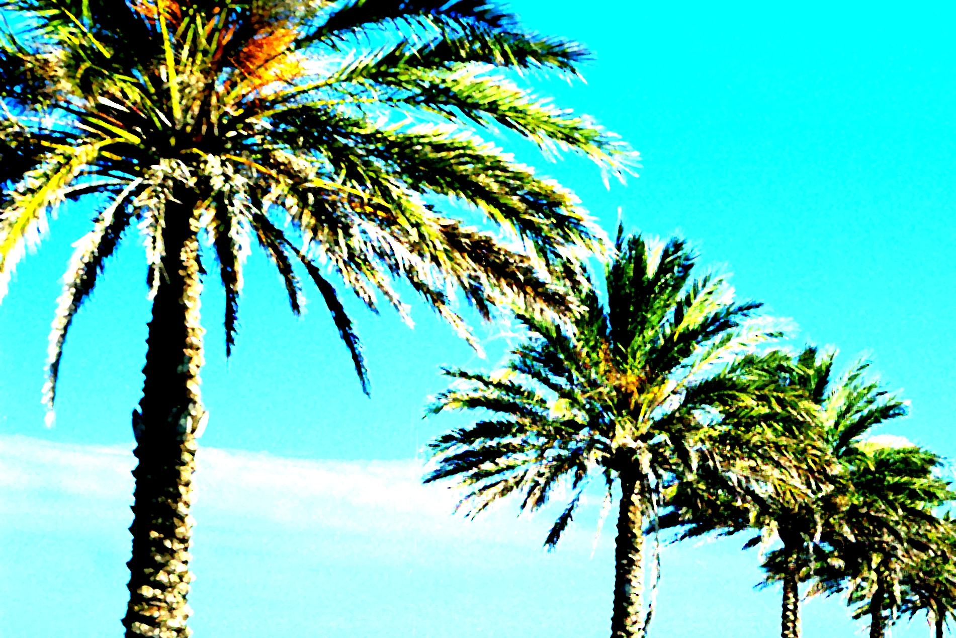 stussy wallpaper palm trees - photo #48