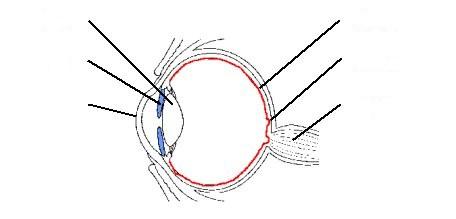 Blank Eye Diagram - Cliparts.co