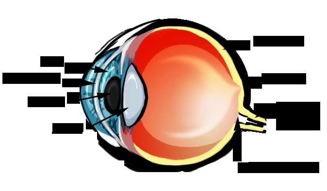 Eye diagram cliparts eye diagram by brittlebear on deviantart ccuart Gallery