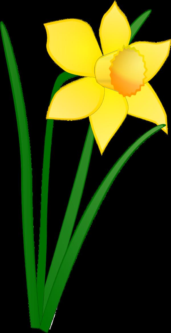 Cartoon Daffodil - Cli...