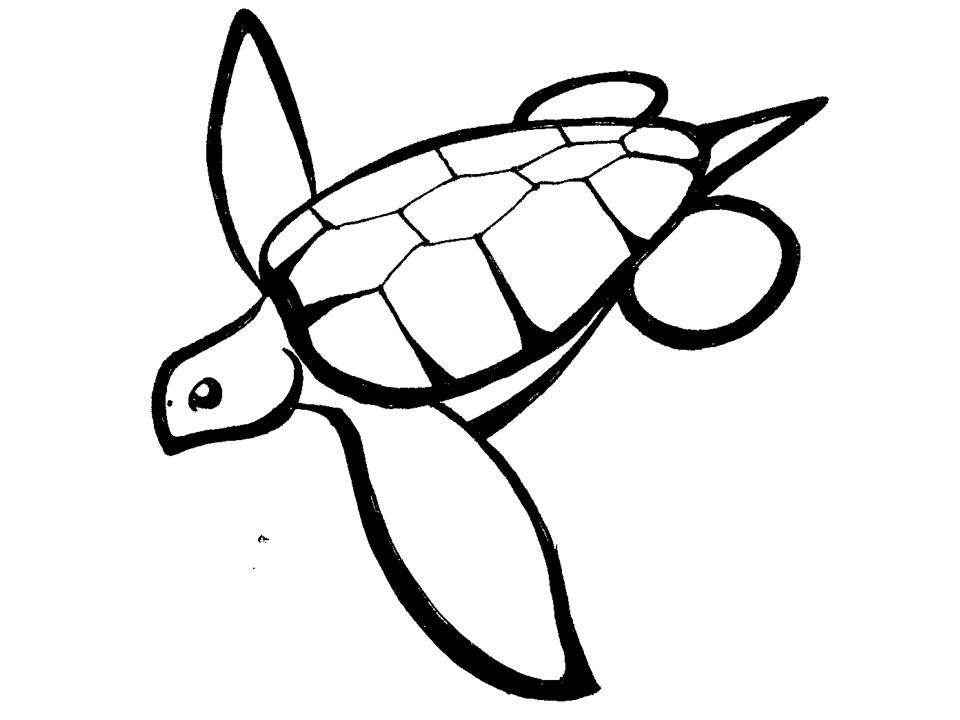 Turtle Line Drawing Tattoo : Turtle line art cliparts