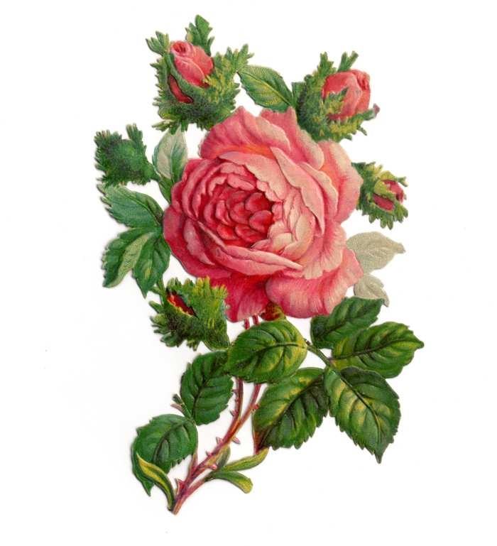 free clipart roses flowers - photo #8