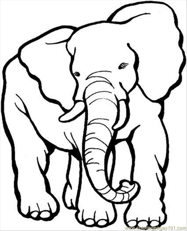 Free Elephant Pictures