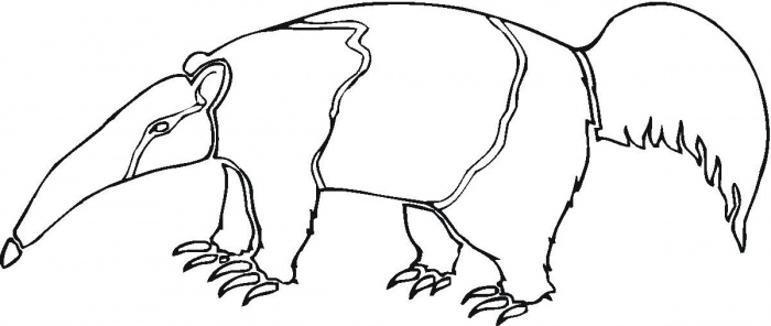 Anteater Drawing Cliparts Co Anteater Coloring Page