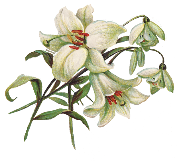 easter lilies free clipart - photo #19